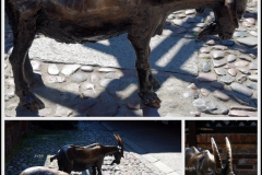"""Pomnik zwierząt rzeźnych - rzeźba """"KOZA"""" – odsłonięcie, ekspozycja stała,"""